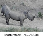 two rhinos together  | Shutterstock . vector #782640838