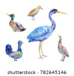 birds living in a swamp. heron  ... | Shutterstock . vector #782645146