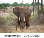 Elephant Close Up In Africa