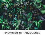 beautiful nature background of... | Shutterstock . vector #782706583