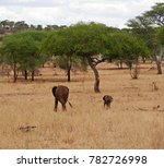 Family Of Elephants  In Africa