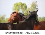 two horses nuzzling each other | Shutterstock . vector #78276208