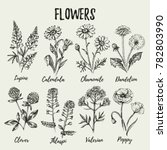 Hand Drawn Sketch Wildflowers...