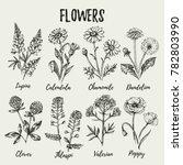 hand drawn sketch wildflowers...   Shutterstock .eps vector #782803990