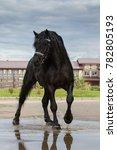 Black Horse On A Blue Sky...