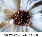 artificial decorating flower... | Shutterstock . vector #782805868