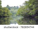 mangrove forest at mentawai... | Shutterstock . vector #782854744
