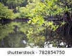 mangrove forest at mentawai... | Shutterstock . vector #782854750