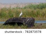 shooting birds in the danube... | Shutterstock . vector #782873578