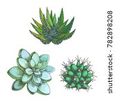 vector set of cacti. vintage... | Shutterstock .eps vector #782898208