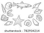 hand drawn seashell  sea shell  ...   Shutterstock .eps vector #782934214