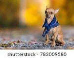 Dog On Autumn Background
