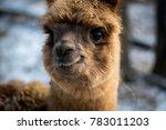 young brown alpaca  | Shutterstock . vector #783011203