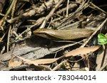 snake wildlife reptile   Shutterstock . vector #783044014