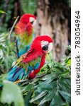 macaw bird on tree  thailand.   Shutterstock . vector #783054964