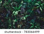 beautiful nature background of... | Shutterstock . vector #783066499