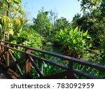 green paradise in thailand | Shutterstock . vector #783092959