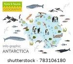antarctic  antarctica   flora... | Shutterstock .eps vector #783106180