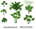 palm trees  a set of jungle... | Shutterstock .eps vector #783114550
