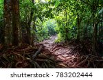 Paved Path Among The Roots Of...