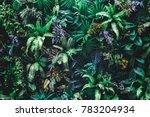 beautiful nature background of... | Shutterstock . vector #783204934