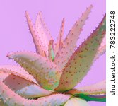 aloe minimal fashion plant on... | Shutterstock . vector #783222748