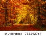 beautiful sunny autumn... | Shutterstock . vector #783242764