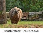 indian rhinoceros in the... | Shutterstock . vector #783276568