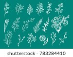 hand drawn vintage floral... | Shutterstock . vector #783284410