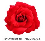 Stock photo red rose isolate on white background 783290716