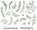botanical illustrations. floral ... | Shutterstock . vector #783340873
