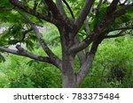 beautiful trunk texture ... | Shutterstock . vector #783375484