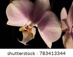 close up of an orchid flower | Shutterstock . vector #783413344
