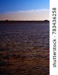 landscape of marsh full of... | Shutterstock . vector #783436258