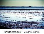 landscape of marsh full of... | Shutterstock . vector #783436348