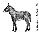 Donkey Sketch Style. Hand Draw...