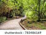 people walking at the muir... | Shutterstock . vector #783486169