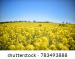 canola field  new south wales ... | Shutterstock . vector #783493888