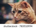 domestic ginger cat at home | Shutterstock . vector #783510994