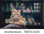 domestic ginger cat at home | Shutterstock . vector #783511024