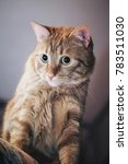 domestic ginger cat at home | Shutterstock . vector #783511030