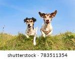 dog hopping over a green hill... | Shutterstock . vector #783511354