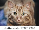 domestic ginger cat at home | Shutterstock . vector #783512968