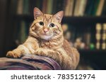domestic ginger cat at home | Shutterstock . vector #783512974