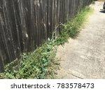 weeds along driveway | Shutterstock . vector #783578473