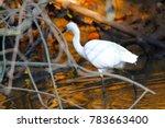 Little Egret Found In North Go...