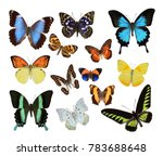 butterfly isolated on a white... | Shutterstock . vector #783688648