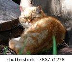 white red headed cat lay near...   Shutterstock . vector #783751228