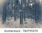 old vintage photo. tree pine... | Shutterstock . vector #783795370