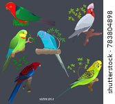 Set Of Brightly Colored Parrot...